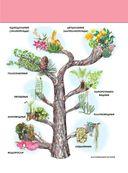 Растения. Полная энциклопедия — фото, картинка — 7