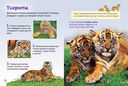 Тигры — фото, картинка — 1