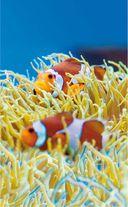 Морской аквариум — фото, картинка — 9