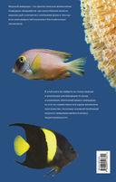 Морской аквариум — фото, картинка — 11