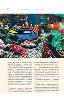 Морской аквариум — фото, картинка — 1