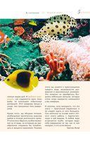 Морской аквариум — фото, картинка — 2