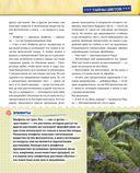 Открываем тайны леса — фото, картинка — 11