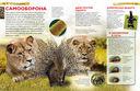 Млекопитающие — фото, картинка — 3