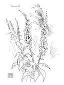 Нарисуй цветы акрилом по схемам — фото, картинка — 7