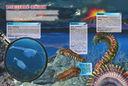 Подводные обитатели — фото, картинка — 3