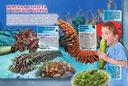Подводные обитатели — фото, картинка — 8