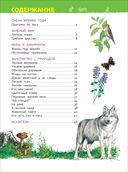 В лесу. Энциклопедия для детского сада — фото, картинка — 3