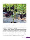 Баклажаны, кабачки и перцы. От рассады до урожая — фото, картинка — 5