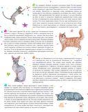 Мы - кошки — фото, картинка — 2