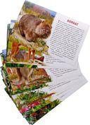 Животные Австралии (набор из 16 карточек) — фото, картинка — 2