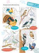 Птицы — фото, картинка — 3